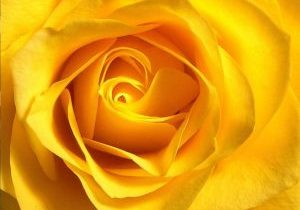3.3.2021 Rose Day_International Women's Day
